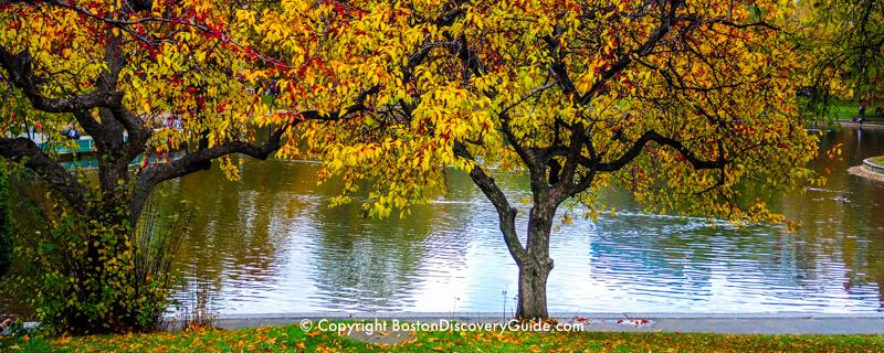 Boston Public Garden - fall foliage
