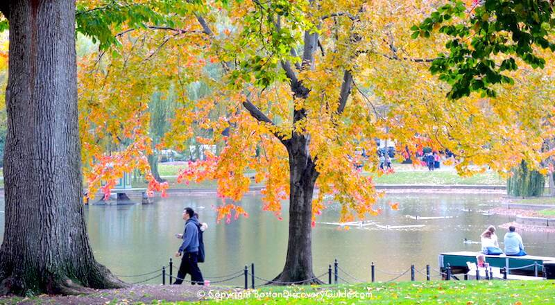 Boston October foliage