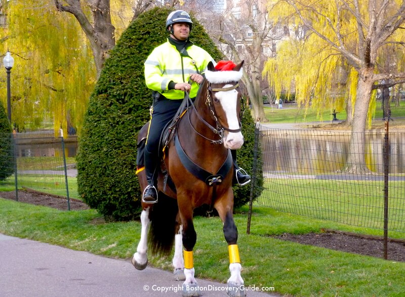 Boston Police officer patrolling on horseback in Boston's Public Garden in December - most leaves have fallen, but the willows still have their golden foliage