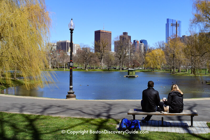 The Lagoon in Boston's Public Garden - never bleak thanks to the yellow-green branches of the weeping willows