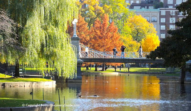 Boston weather in November - Fall foliage in the Public Garden