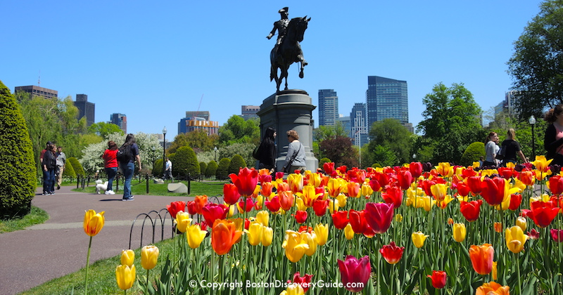 A perfect day in Boston's Public Garden in mid-May