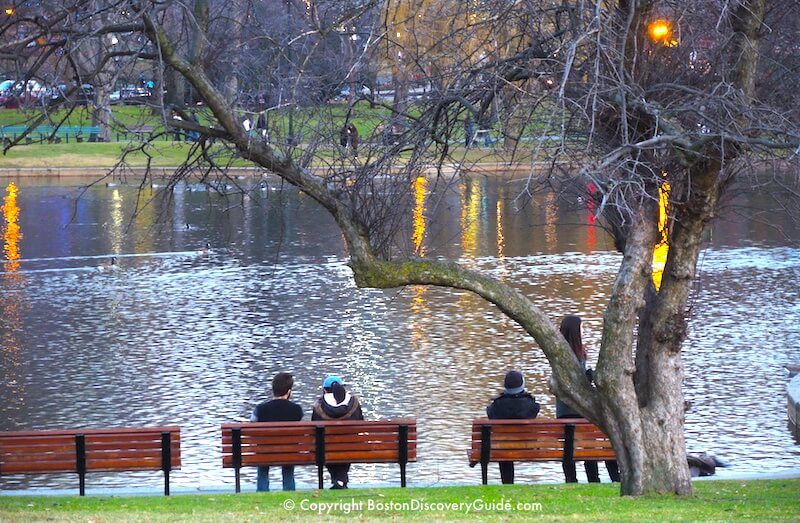 Mid-December in Boston's Public Garden