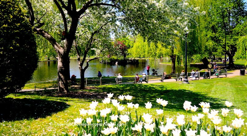 Luxury hotels near boston 39 s public garden and boston common boston discovery guide Boston public garden map