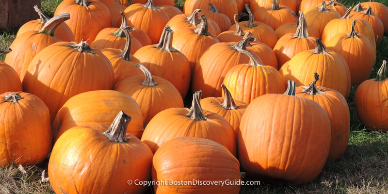 Boston Halloween Parade and Pumpkin Festival
