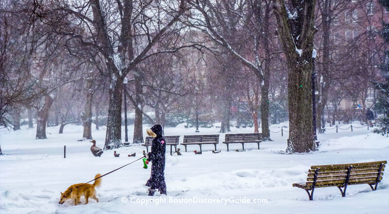 Boston Public Garden during an early January snowstorm