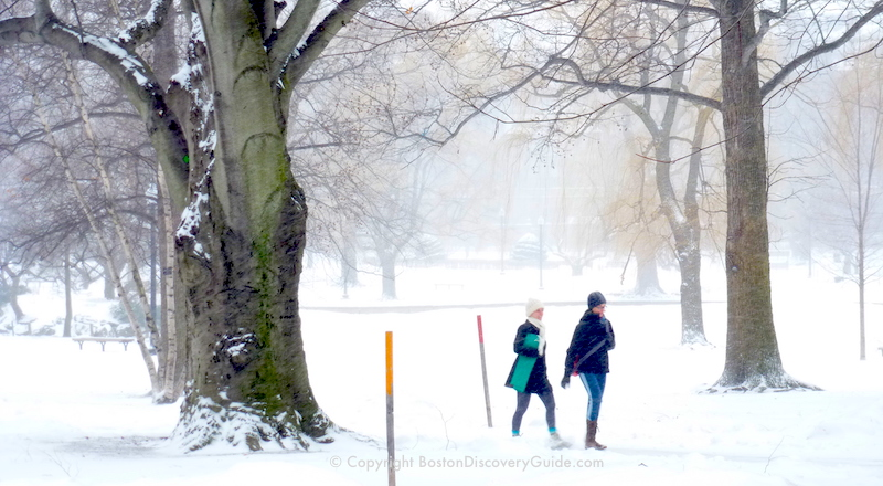Winter snow storm in Boston's Public Garden . . . on a day when NOsnow was predicted!