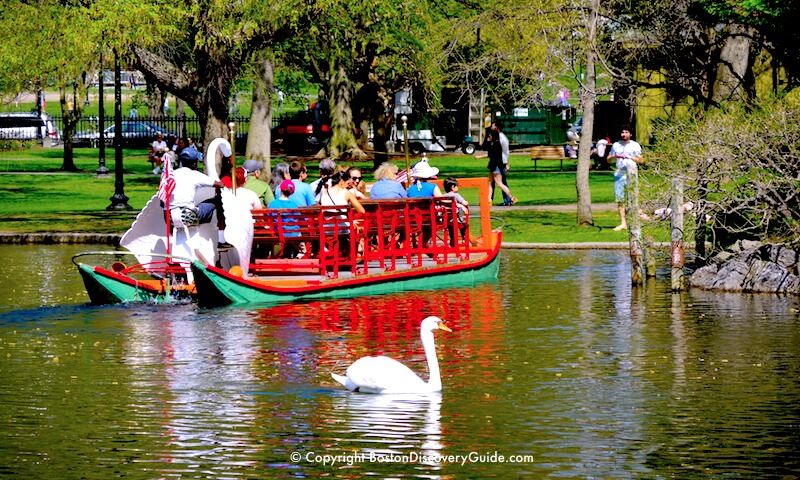 Swan Boat and swan on the Lagoon in Boston's Public Garden, across Boylston Street from the Four Seasons Hotel