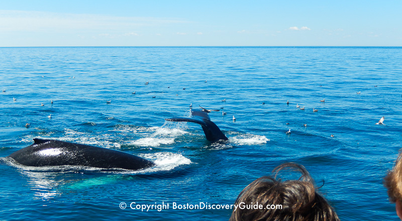 Whale watching cruise from Boston