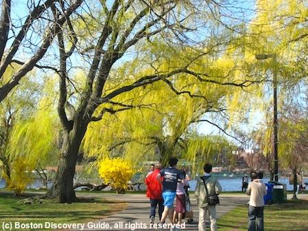 Boston Esplanade in April