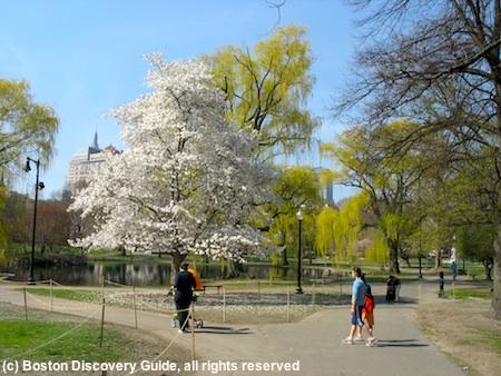 Boston Public Garden in April