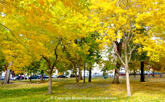 Boston Tourist Tips for October 2013 - Golden foliage on Boston Common
