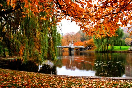 Boston fall foliage in the Public Garden