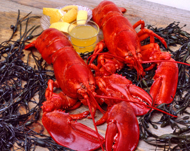 Most Boston seafood restaurants feature boiled lobster, like this pair shown with drawn butter and lemon on a bed of seaweed