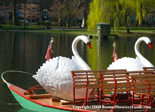 Boston's Public Garden - Swan Boats in the Lagoon