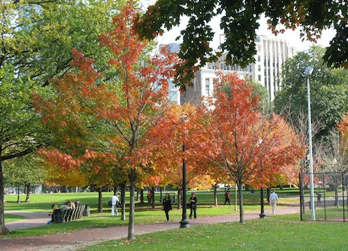 Boston Common - Colorful October foliage