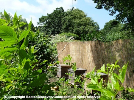 Bee hives in Boston's Victory Garden