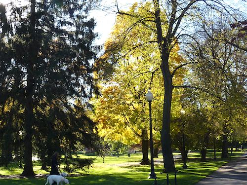 Foliage turning from golden to russet in this tranquil scene in the Public Garden/ Fall Foliage Report - www.boston-discovery-guide.com