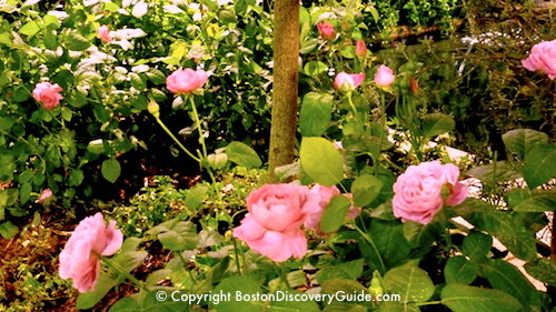 Boston Flower and Garden Show Exhibit showing Romantic Rose Garden