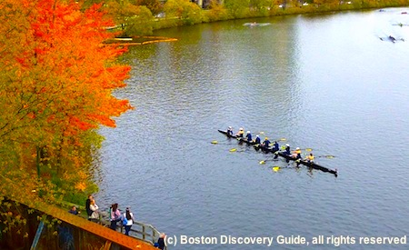 Crew teams in the Charles River, Boston, MA