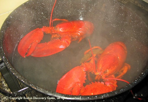 Lobsters are completely red / How to Boil Lobster - www.boston-discovery-guide.com