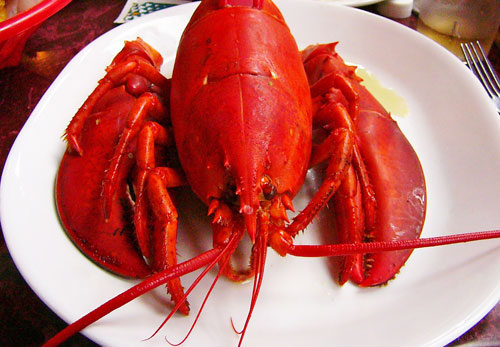Steamed lobster, from www.boston-discovery-guide.com/how-to-steam-lobster.html
