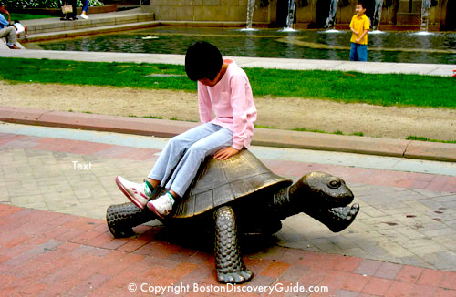 Photo of tortoise in Nancy Schon's