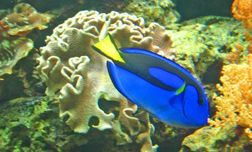 Tropical fish types fish breeds for your aquarium adds for Aquarium fish list