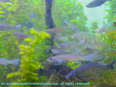 Photo of a group of fish with sea plants at New England Aquarium in Boston