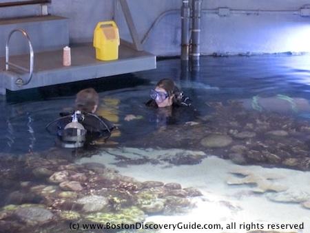 Divers during a a show at New England Aquarium