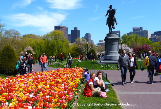 Boston garden tours in June include Open Gardens at the Victory Gardens