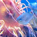 Fish photographed at New England Aquarium in Boston