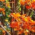 Boston Fall Foliage Tours