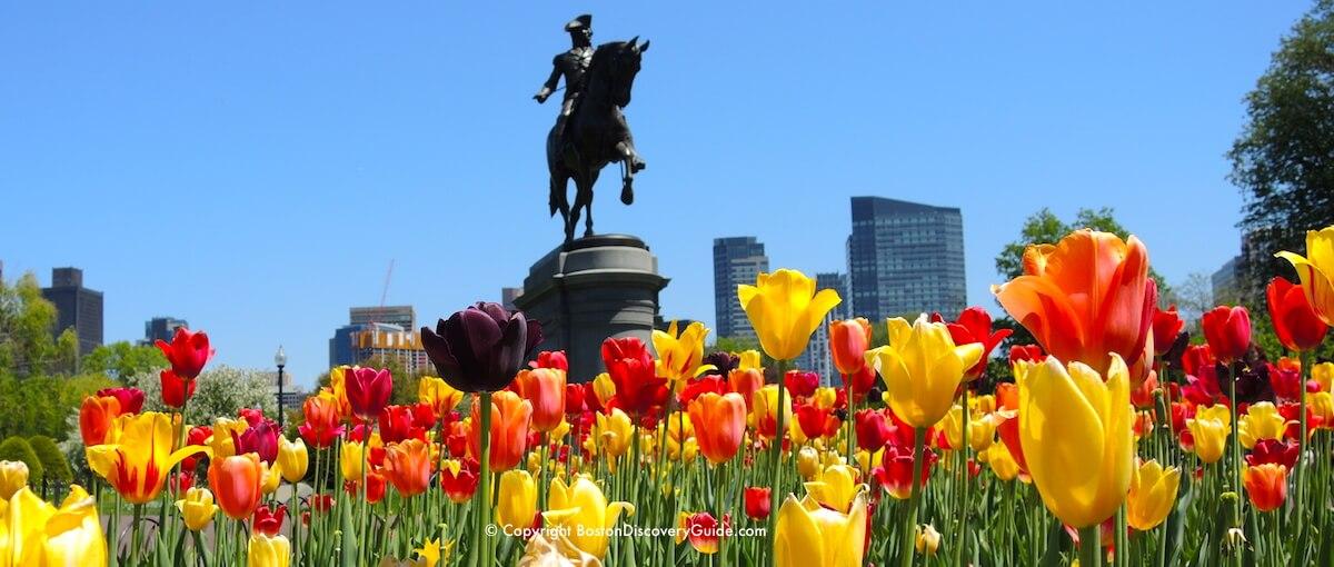 Flowering trees in Boston's Public Garden