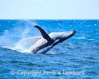 Boston whale-watching cruise