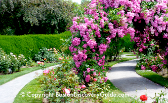 All about garden tours in Boston and Cambridge Massachusetts