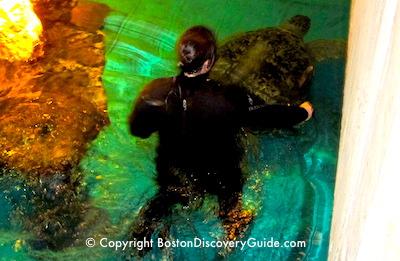 February vacation week in Boston - New England Aquarium