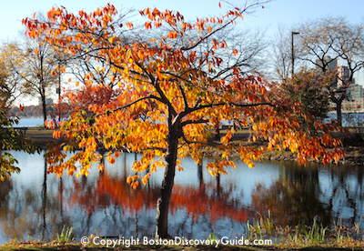 Fall foliage on Boston's Esplanade
