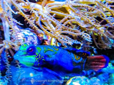 Fish at the New England Aquarium