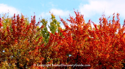 Fall Foliage tour from Boston