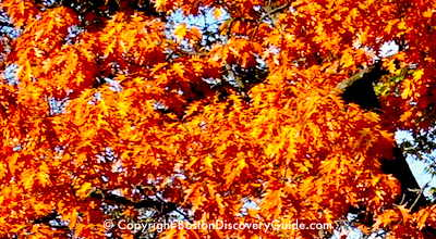 Boston fall foliage tours and cruises
