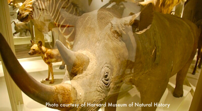 Harvard Museum of Natural History</h3>