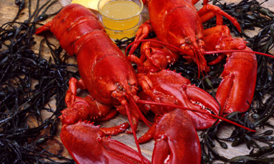 Boston restaurants - How to eat a lobster