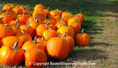 Pumpkin Fest in Boston MA