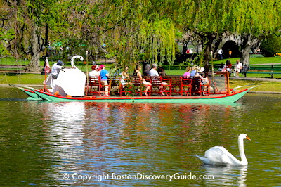 Swan Boats in Boston's Public Garden