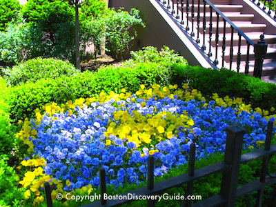 Where to see spring flowers in Boston