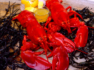 Lobsters - favorite Labor Day weekend meal in Boston