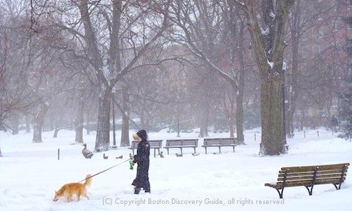 Boston weather in January - www.boston-discovery-guide.com