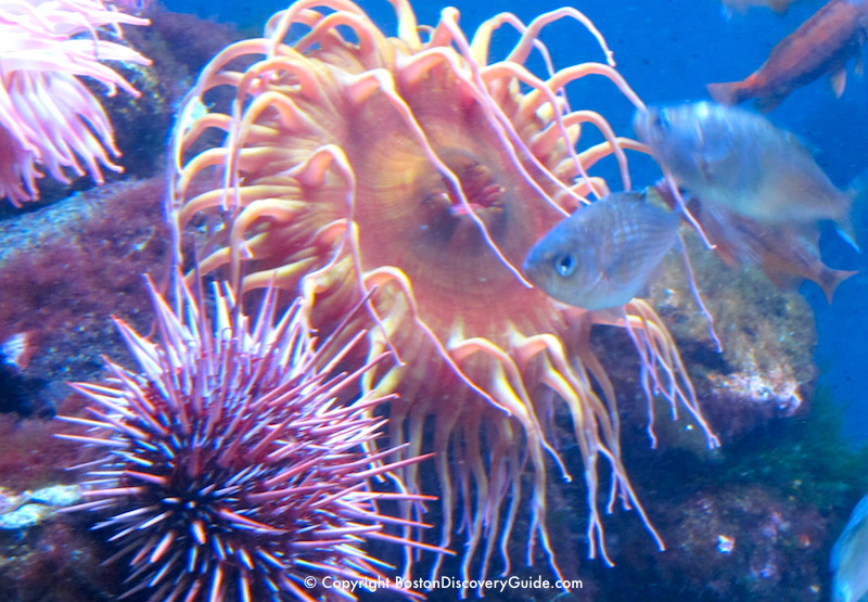 Are these sea anenomes hoping to catch this fish for dinner?
