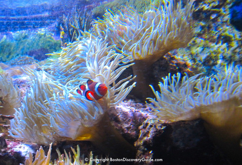 Colorful tropical fish on a coral reef at the New England Aquarium